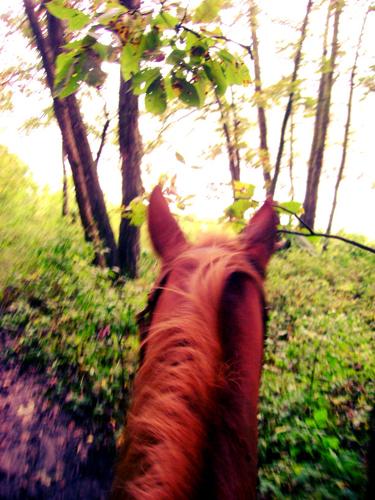 iowa equine trails