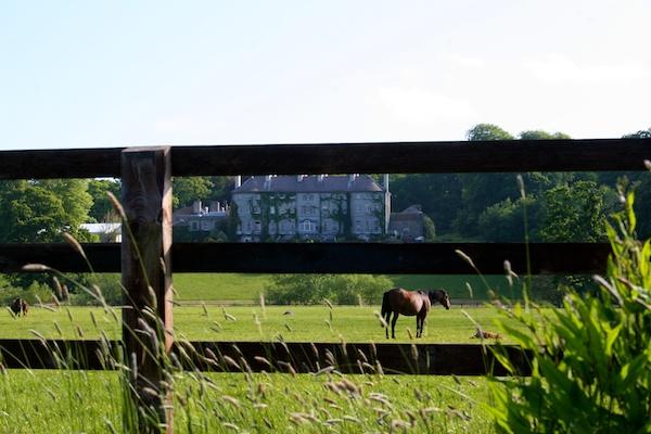 ireland mount juliet estate horses