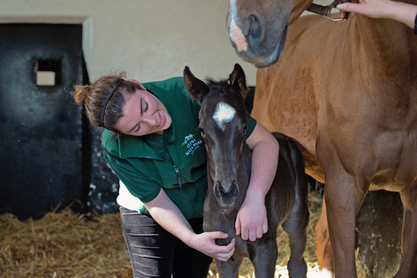 Irish National Stud Mare and Foal