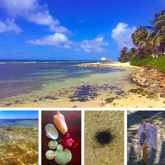 Jamaica shore seashells
