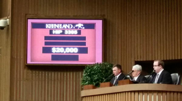 keeneland horse sales hip number