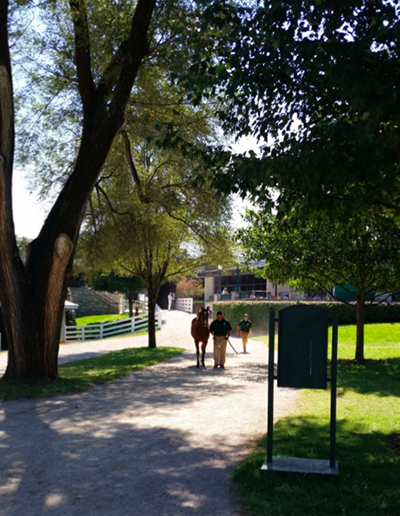 keeneland thoroughbreds