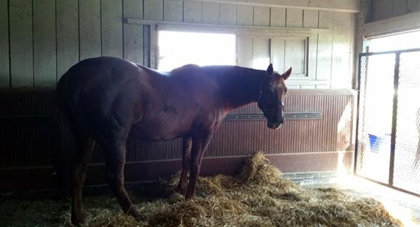Kentucky Horse Park horses