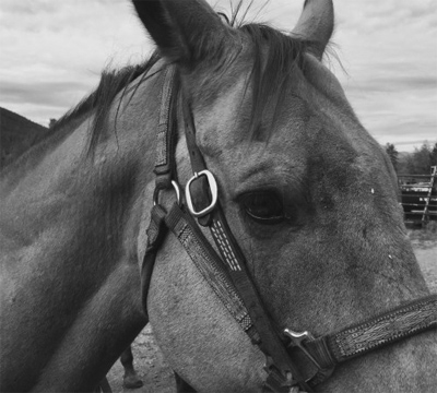 Close up of a beautiful horse before going on a horsebacking trip in Keystone, Colorado