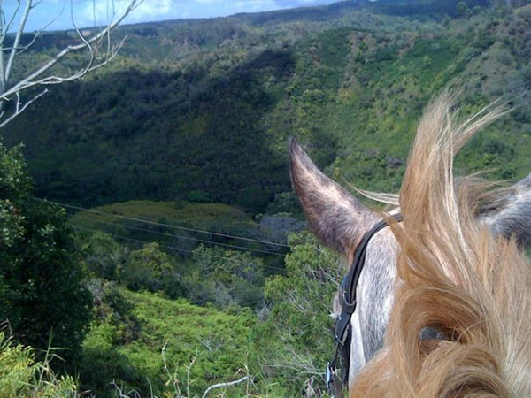 between the ears view from horseback of koa ridge canyon hawaii