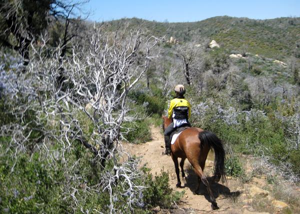 laguna mountains horse trails