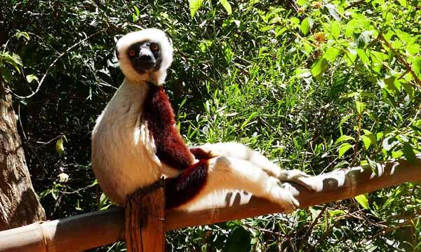 lemur-part-in-madagascar