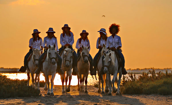 equestrian travel articles the white horses of camargue. Black Bedroom Furniture Sets. Home Design Ideas