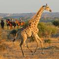 Limpopo Horse Safaris
