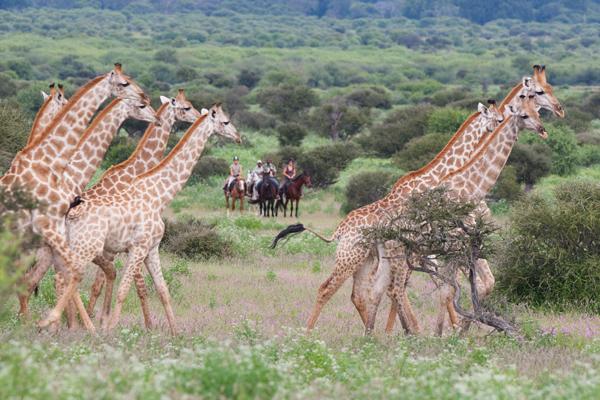 limpopo mashatu game reserve