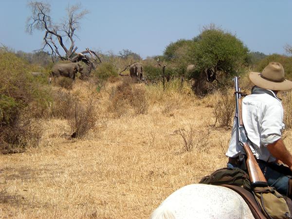 Limpopo valley horseback riding