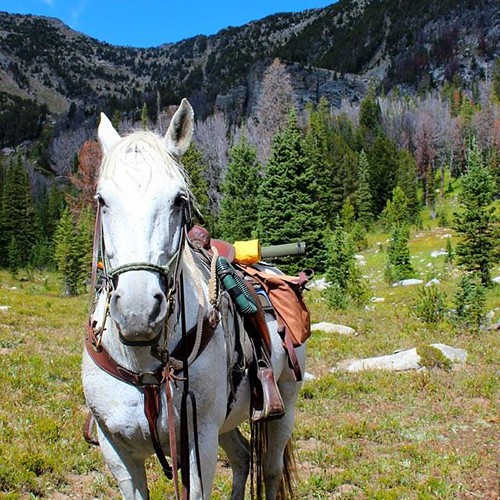 lone mountain ranch fall rides in montana