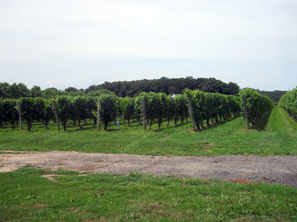 long island horse farms vineyards