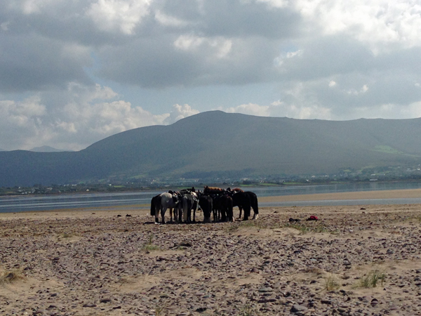 Horses Rossbeigh Beach Ireland