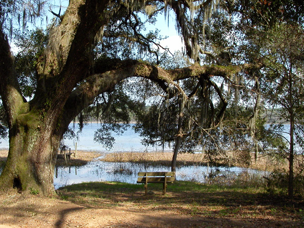 Photo of bench on shoreline of Lake Overstreet by Arlen Egley