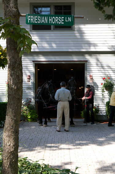 Mackinac Island friesian horses