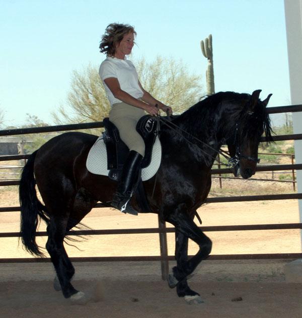 brazil horses