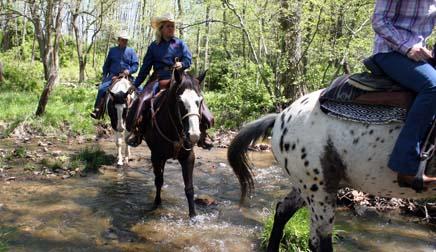 Marriott Ranch horse riding