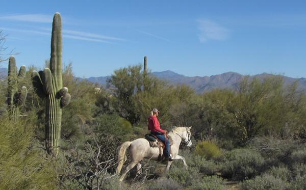 mcdowell trails horseback arizona