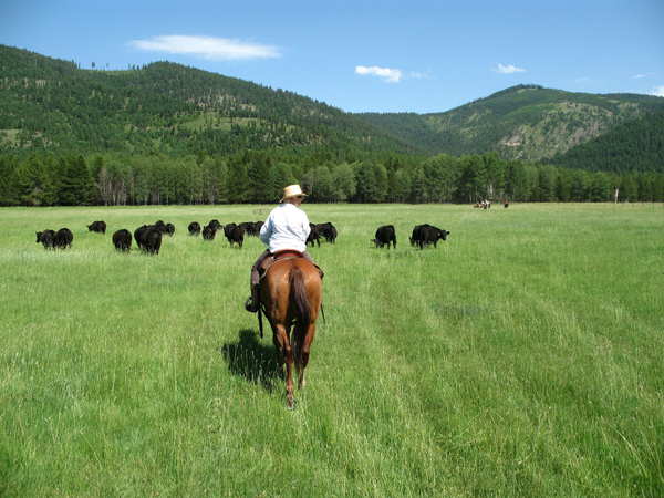 mcginnis meadows cattle and guest ranch