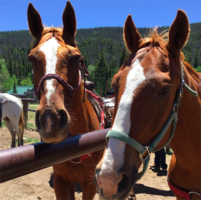 Good ranch horses at Medicine Bow Lodge