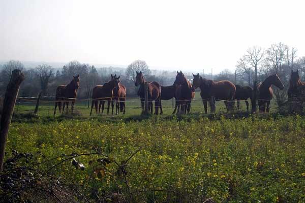 meeting herd