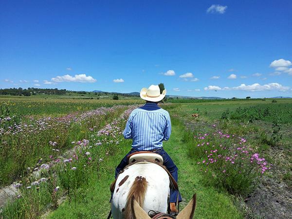 mexico horse holidays