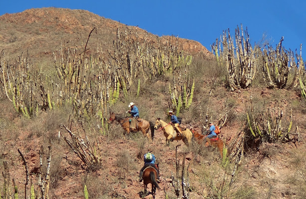 mexico horseback riding vacations