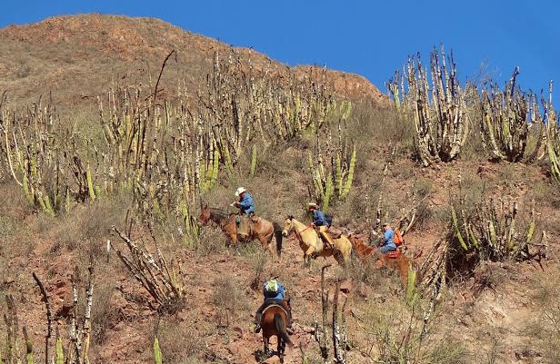 mexico horseback riding vacations