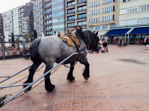 Mina Horse Oostduinkerke North Belgium