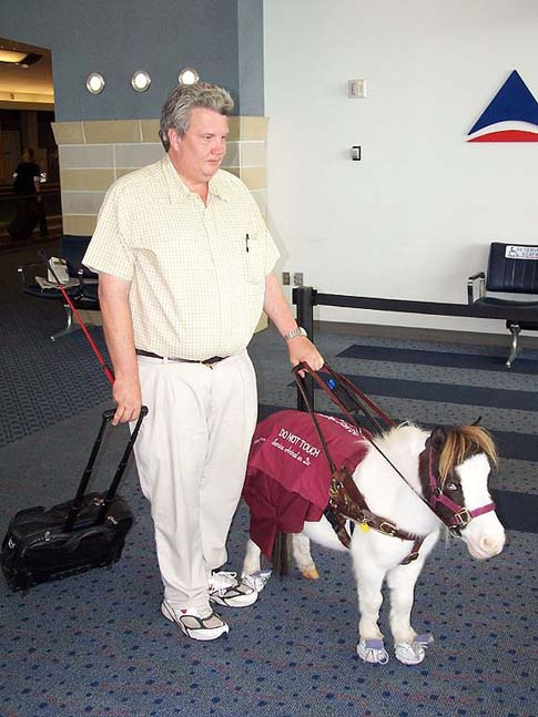 Mini Guide Horse at Airport