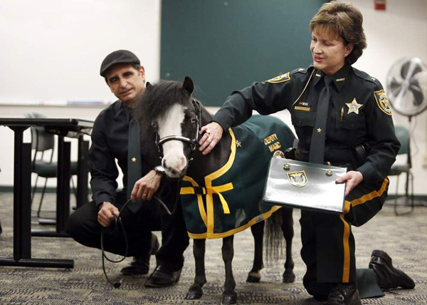 Magic Mini Therapy Horse Receives Award