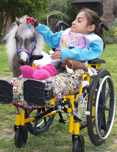 Mini Therapy Horse With Girl in Wheelchair