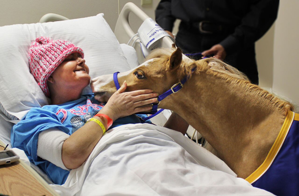 Mini Therapy Horse Hospital