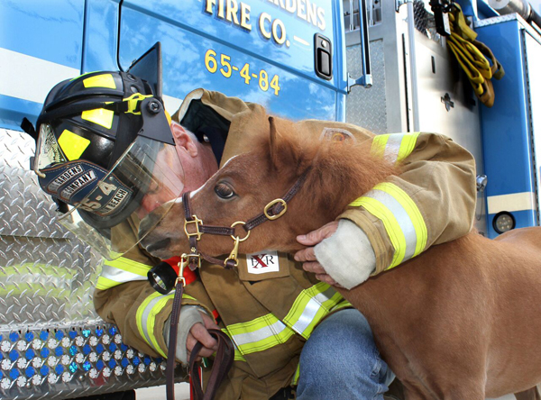 Mini Therapy Horse with Firefighter