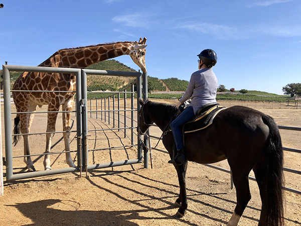 woman riding horse next to giraffe