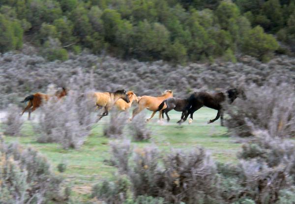 Monero Mustangs
