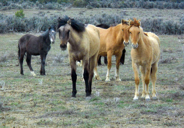 Mustangs in New Mexico