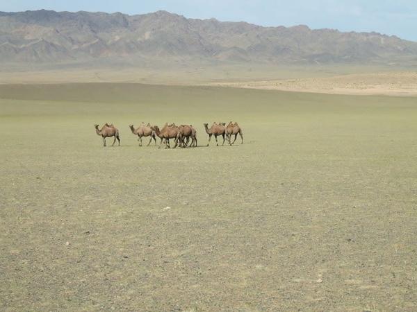 Mongolia Gobi