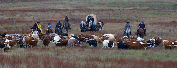 Moore Ranch Kansas Cattle Drives