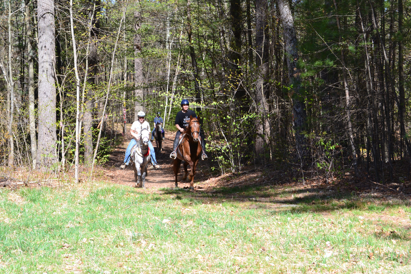 group of equestrians riding in mount toby demonstration forest in massachusetts