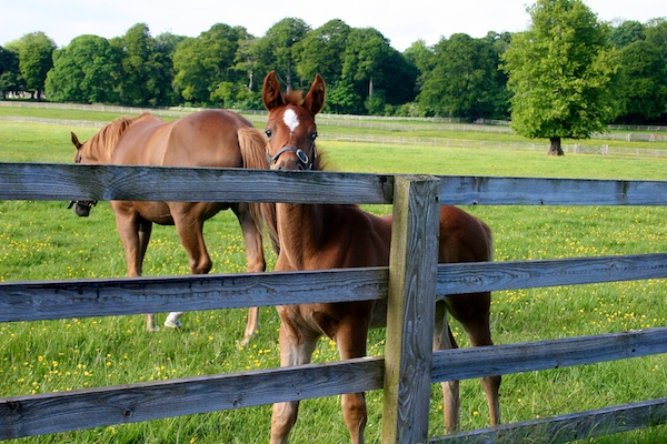 mount juliet equestrian vacation ireland