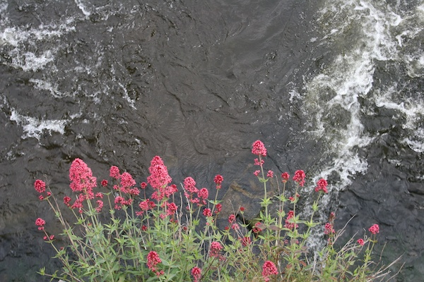 mount juliet flowers