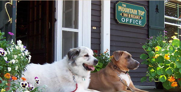 mountain top inn pet friendly