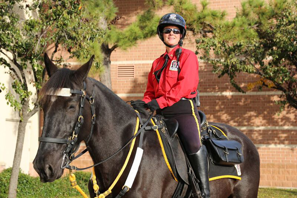 Mounted Patrol Horse and Rider