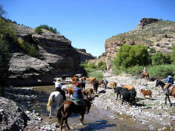 cattle drive holiday new mexico