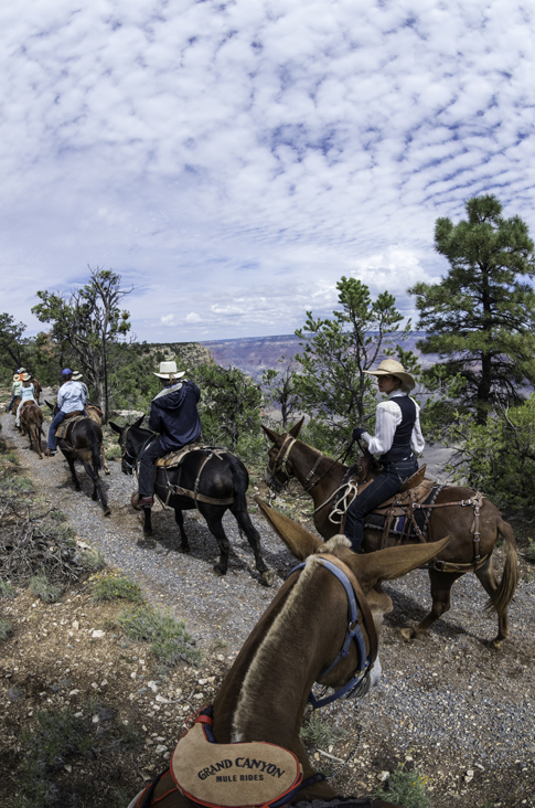 Canyon Vistas Mule Ride South Rim
