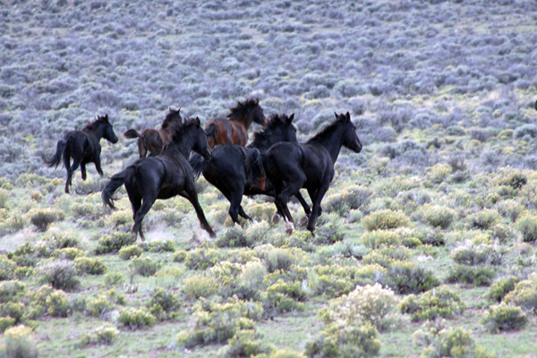 Equestrian Travel Articles Viewing Wild Horses At