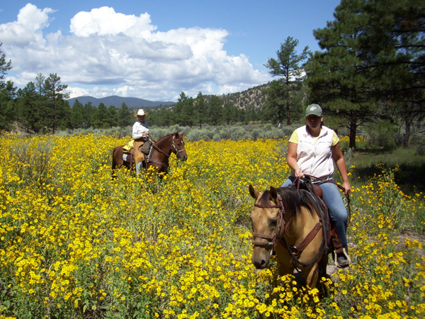 new mexico horseback geronimo trail guest anch