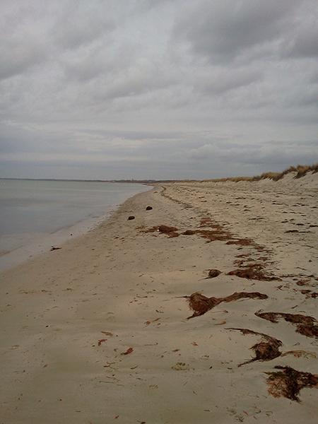 nickerson beach in brewster massachusetts